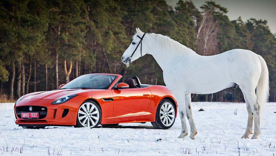 Встречаем год Лошади с лучшими автомобилями 2013-го — ДРАЙВ